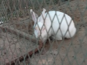 The hoping Rabbit